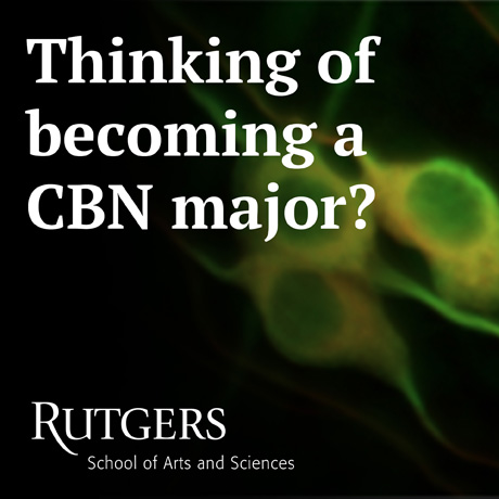 Thinking of Becoming a CBN Major?